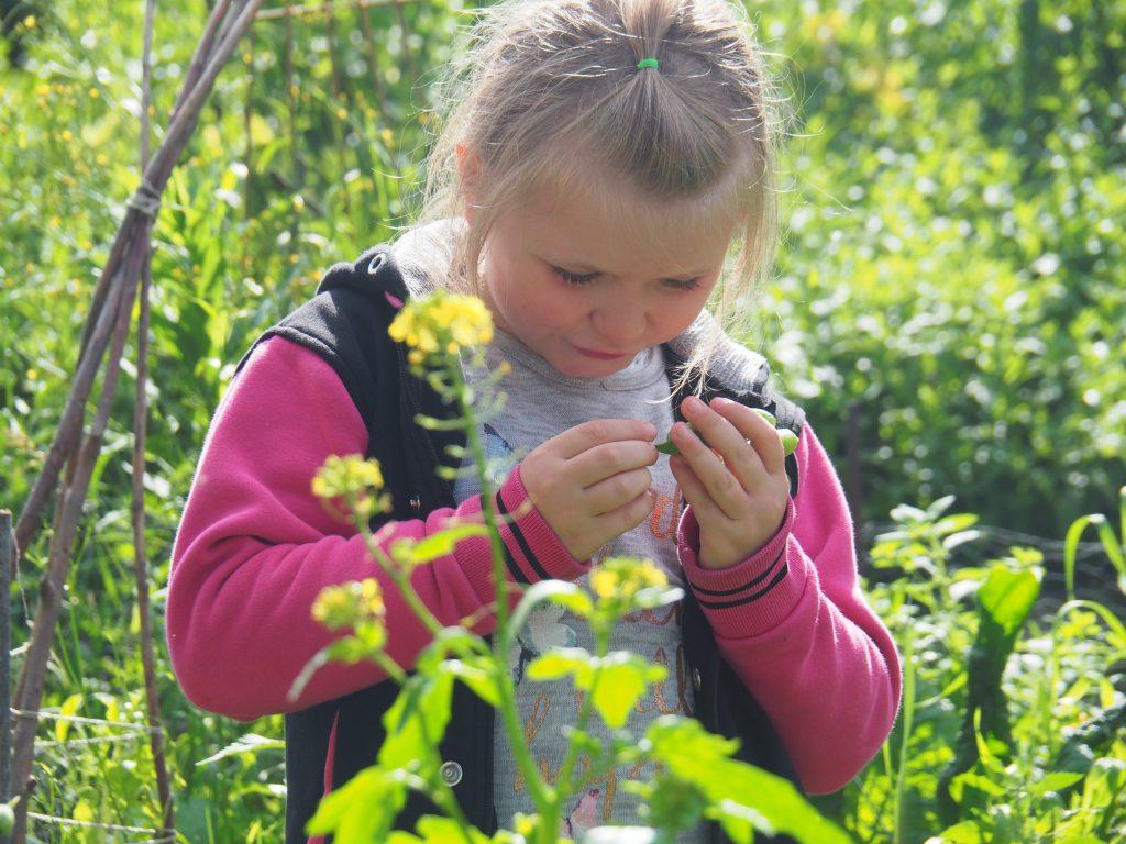 natur-entdekcen-kreativgartene.v.
