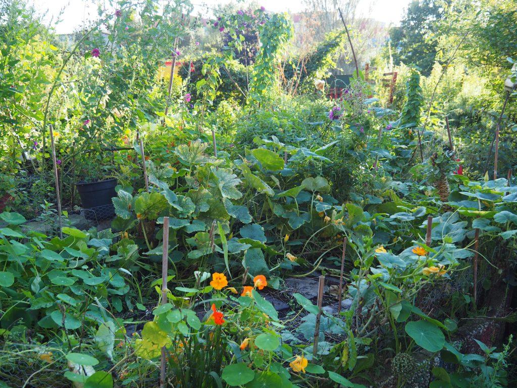 pflanzenvielfalt-kreativgartene.v.