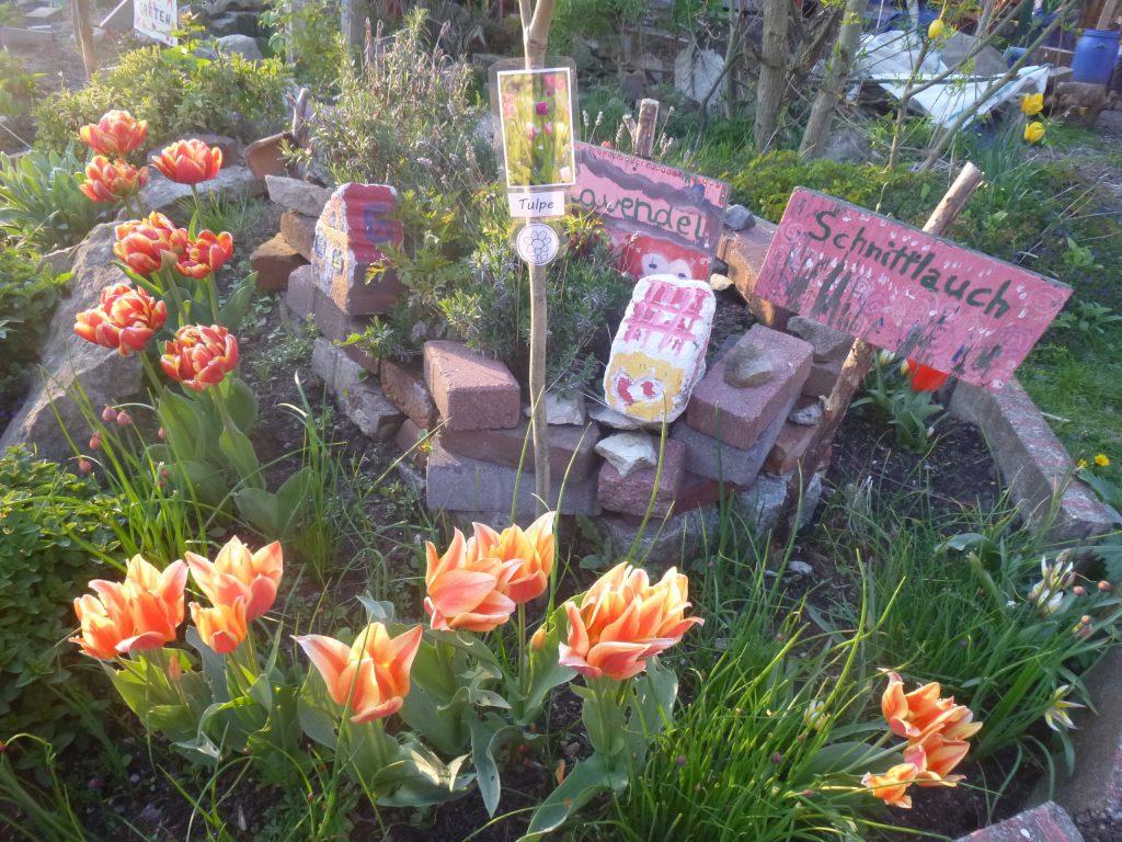 tulpen-kreativgartene.v.